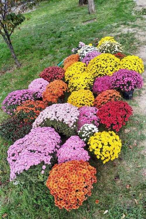 Квіти1