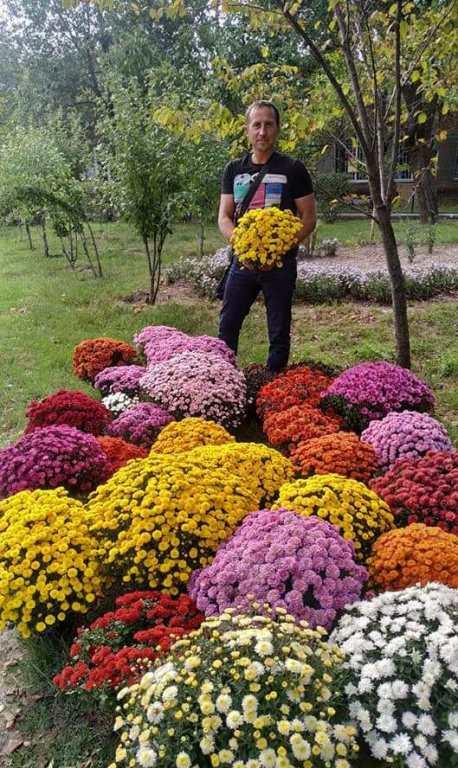 Квіти2