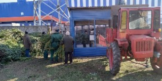 Christmas tree to Nikolaev Zoo