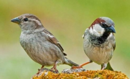 World Sparrows Day